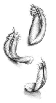 soft feathers, i would love this on my shoulder. maybe black and white, with a splash of colour incorperated somehow?