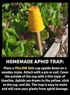 Good tips to combat tomato issues. Homemade yellow sticky traps catch aphids that eat your tomato plants Organic Gardening, Gardening Tips, Organic Soil, Vegetable Gardening, Planting Tools, Gardening Zones, Gardening Services, Veg Garden, Grow Organic