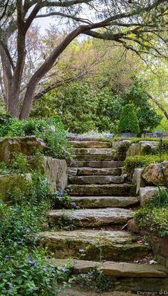 Garden steps . . . .