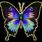Beautiful Animated Butterfly Gifs at Best Animations