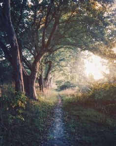 Dagelijkse wandeling