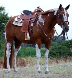 Flashy Western horse!