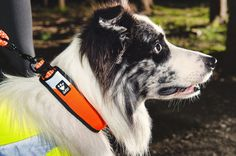 Pehmustettu ja ergonominen Hurtta LG Dazzle -kaulapanta on varusteltu tehokkailla heijastimilla, jotka auttavat koiraasi erottumaan pimeällä. / Soft and ergonomic Hurtta LG Dazzle collar has effective reflectors that make your dog standout in the dark.