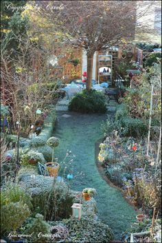 Welcome to Boxwood Cottage: It's that time again ~ first Valentines and frosted garden
