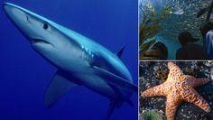 Aquarium of the Bay on Fisherman's Wharf: More than 20,000 Fascinating Marine Animals
