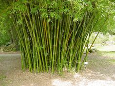 bamboo seabreeze - Google Search