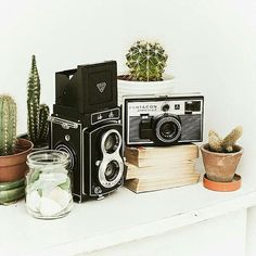Pentacon Electra 2 - Seagull 4A TLR - Cacti - Succulents - Functional Vintage Cameras with Folk Patterned by FolkCamera
