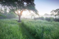 Garden & Landscape Design London by Adolfo Harrison Gardens Garden Landscape Design, Landscape Architecture, Garden Landscaping, Dream Garden, Home And Garden, Cedar Pergola, Western Red Cedar, Lush Green, Water Features