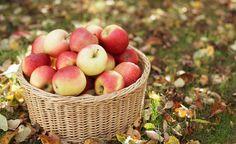APPLES...Omenasta saa monenlaisia herkkuja.