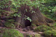 Co-creating with the devas of findhorn garden   Bioregional Animism