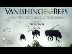 Trailer: VANISHING OF THE BEES - Das Verschwinden der Bienen - Nominiert für den Cosmic Angel Award 2013 http://www.cosmic-cine.com • http://www.facebook.com/CosmicCine  Website Film: http://www.vanishingbees.com