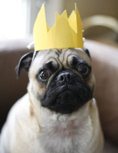 http://europug.eu/ Biscuit and paper crown