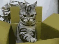 13 Funny Cat GIFs