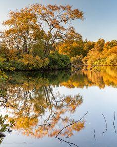 Autumn at Bolam lake Northumberland. England, Autumn, River, Portrait, Outdoor, Outdoors, Fall Season, Headshot Photography, Fall