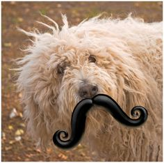 Mustache pacifier for dogs hahahaha have to get one