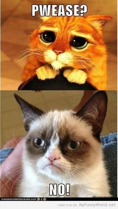 Grumpy cat vs Everyone (32 pictures) | My funny world