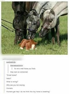 big horses being concerned for a smol stuffed horse and it's cute