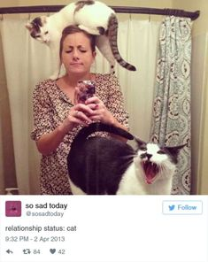 Funny Cat Tweets 15 Photos