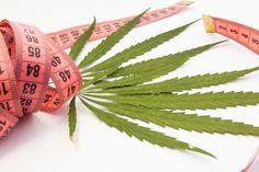 Autorzy badań uważają, że analizy ukazały, iż nawet jeżeli konsumpcja marihuany pobudza apetyt, osoby, które ją spożywają, są mniej narażone na otyłość.