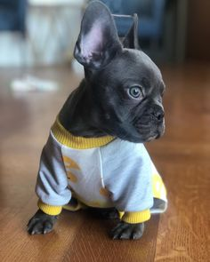 "fa977247b Pork Chop on Instagram: ""Good morning LA 🌞 #LA #goodmorning #frenchbulldog  #pajamaparty #dogsinpajamas #teacupfrenchies #frenchiepuppy #frenchie ..."