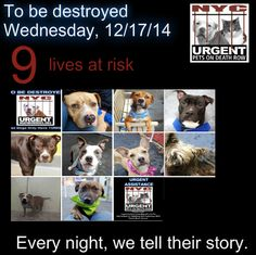 TO BE DESTROYED: 9 Dogs to be euthanized by NYC ACC- WED. 12/17/14. This is a HIGH KILL shelter group. YOU may be the only hope for these pups! ****PLEASE SHARE EVERYWHERE!To rescue a Death Row Dog, Please read this: http://urgentpetsondeathrow.org/must-read/ To view the full album, please click here: https://www.facebook.com/media/set/?set=a.611290788883804.1073741851.152876678058553&type=3