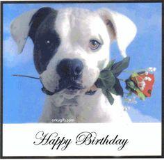 Happy Birthday Animated Gif (shared via SlingPic) Happy Birthday Animals, Happy Birthday Dog, Happy Birthday Pictures, Animal Birthday, Happy Birthday Cards, Birthday Greetings, Birthday Animated Gif, Birthday Roses, Birthday Stuff