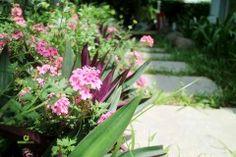 Thiết kế thông cảnh quan sân vườn đẹp hiện đại http://greenmore.vn/thiet-ke-canh-quan-san-vuon-3/