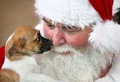 Santa Claus Is Coming to Town. Santa getting a kiss from a stray puppy