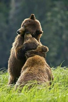 A big grizzly bear hug for WOOHP, who has finally started posting regularly again Nature Animals, Animals And Pets, Baby Animals, Funny Animals, Cute Animals, Animals Kissing, Forest Animals, Beautiful Creatures, Animals Beautiful