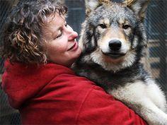 Refuge Pageau - Abitibi-Témiscamingue Road Trip, Canada Travel, Husky, Deer, Wolf, Wildlife, The Incredibles, Animals, Destinations