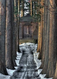 Dreamy Log Cabin Setting