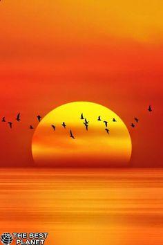 Natureza sonhadora do ~ surpreendente do por do sol - Sonnenaufgänge und Sonnenuntergänge - Best Tattoo Share Cool Pictures, Cool Photos, Beautiful Pictures, Amazing Sunsets, Amazing Nature, Beautiful World, Beautiful Places, Beautiful Sunrise, Sunset Beach