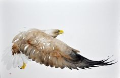 This would be great- possible as a tattoo? Sea Eagle #1 - Karl Mårtens - watercolor