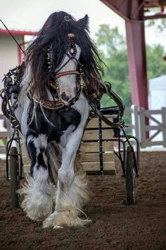 Gorgeous picture of a Gypsy Vanner All The Pretty Horses, Beautiful Horses, Animals Beautiful, Work Horses, Horses And Dogs, Horse Photos, Horse Pictures, Gypsy Horse, Majestic Horse