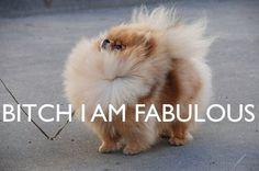 bitch i am fabulous, humor, dog, cute