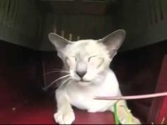 ▶ Psychic Cat - Mouse - Treat - YouTube