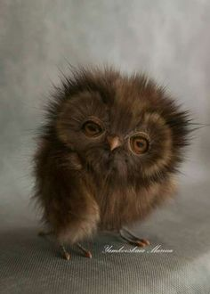 Super cute baby animals - Funny Wild Animal This video is a compilation of wildlife of animal babies. They're very cute animals just you have seen. Baby Owls, Cute Baby Animals, Animals And Pets, Funny Animals, Baby Baby, Funny Owls, Talking Animals, Pretty Birds, Beautiful Birds