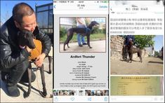 Se están enviando galgos retirados a China para hervirlos vivos y obtener carne