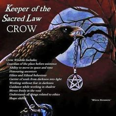 The Crow – Keeper of the Sacred Law Wicca Witchcraft, Magick, Green Witchcraft, Animal Spirit Guides, Crow Spirit Animal, Crows Ravens, Arte Horror, Animal Totems, Book Of Shadows