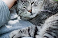 How Cats Choose Their Owners: Can It Be Love At First Sight?   THE PUSSINGTON POST