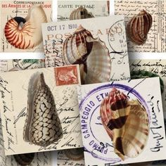 4x6 Inch Digital Collage Sheet Sampler -- Vintage Seashell Postage In 7/8 Inch…
