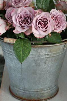Shabby Chic Roses in a galvanized bucket Love Rose, My Flower, Pretty Flowers, Fresh Flowers, Flower Power, Pink Roses, Pink Flowers, Lavender Roses, Silver Roses