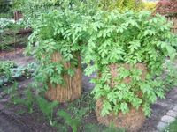 The Potato Tower – Successfully grow potatoes even in small gardens – Growing Potatoes - Growing Plants at Home Diy Garden, Greenhouse Gardening, Small Gardens, Pallets Garden, Garden Images, Planting Hydrangeas, Growing Potatoes, Landscaping Plants, Potato Tower