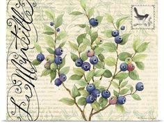 Botanical Blueberries Photo Canvas Print | Great Big Canvas