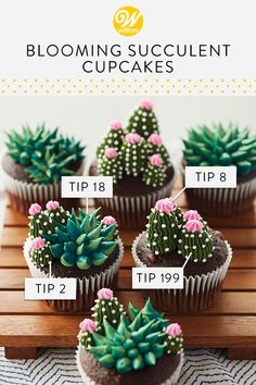 your cupcakes into little mini gardens with these Blooming Succulent Cupcakes. Decorating tips can be used for more than just flowers, and with some star and round tips, you can create lovely cacti that look like the real deal! your cupcakes i. Cupcake Piping, Buttercream Cupcakes, Buttercream Flowers, Cupcake Cakes, Cupcake Party, Piping Buttercream, Buttercream Cake Designs, Fun Cakes, Chocolate Buttercream