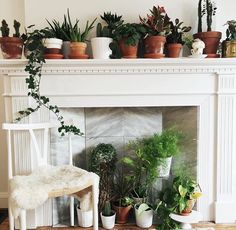 The best kind of fireplace Plant decor inspiration Fireplace Mantels, Fireplace Decorations, Fireplace Ideas, Fireplace Bookcase, Mantel Ideas, Faux Fireplace, Mantle, Fireplaces, Modern Gallery Wall