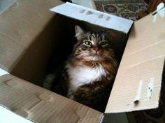 Mitzi Cat | Pawshake