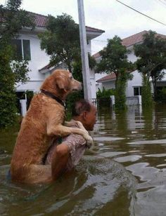 Man saving his dog from a flood