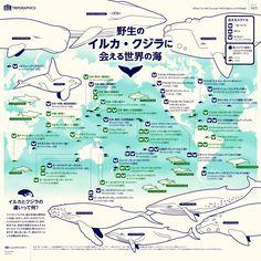 野生のイルカ・クジラに会える世界の海 トリップアドバイザーのインフォグラフィックスで世界の旅が見える