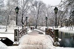 Winter view in a park in Riga Latvia  Fine Art by BlossomingDream